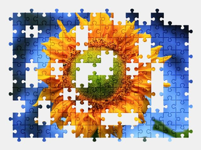 free jigsaw puzzle online sunflower,yellow,summer,plant,color,nature,flower