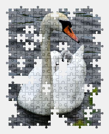 free jigsaw puzzle online swan,nature,bird,water