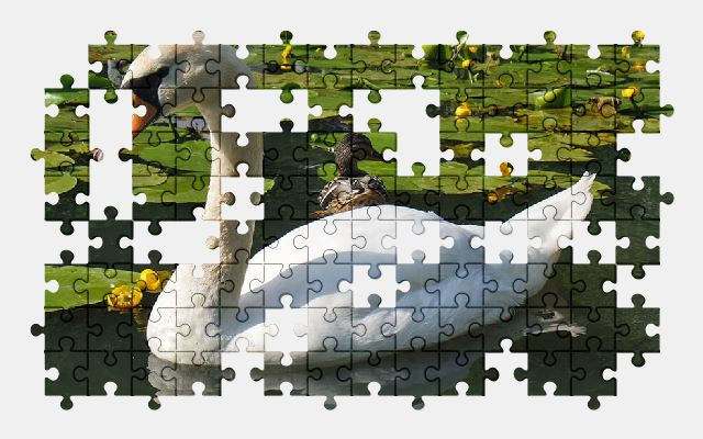 free jigsaw puzzle online swan,bird,animal