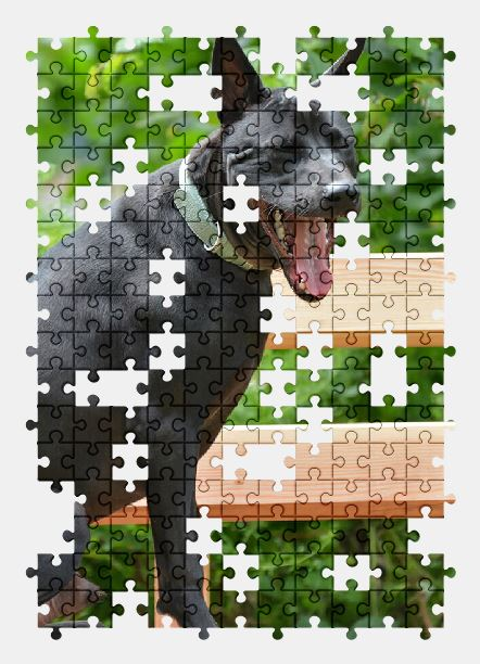 free jigsaw puzzle online dog,animal
