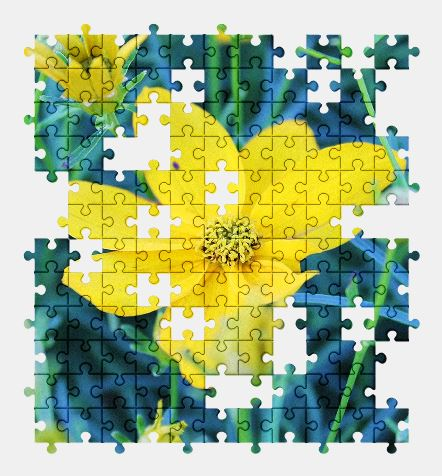 free jigsaw puzzle online yellow,flower,nature,plant,summer