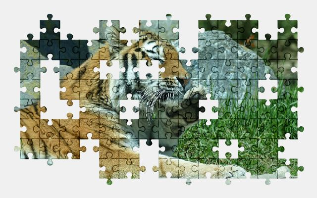 free jigsaw puzzle online tiger,cat,predator,animal