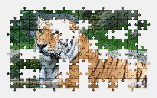free jigsaw puzzle online tigress,nature,zoo,wild,africa