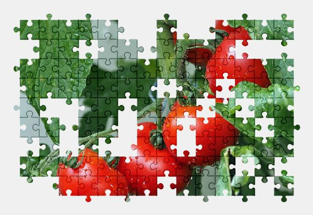free jigsaw puzzle online tomatoes,vegetable,food,nature