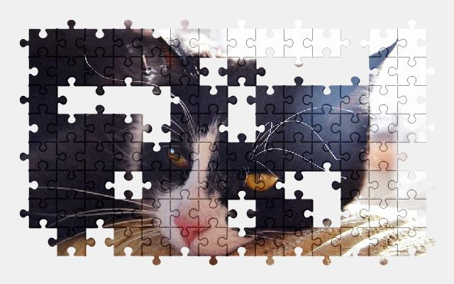 free jigsaw puzzle online pet,cat,animal,eyes,cute