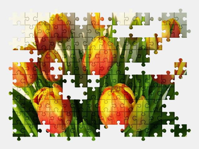 free jigsaw puzzle online tulip,flower,spring