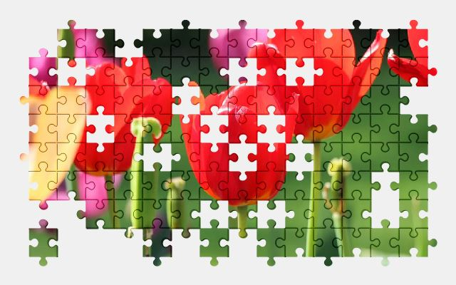 free jigsaw puzzle online tulip,flower,nature