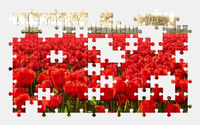 free jigsaw puzzle online tulips,flower,nature