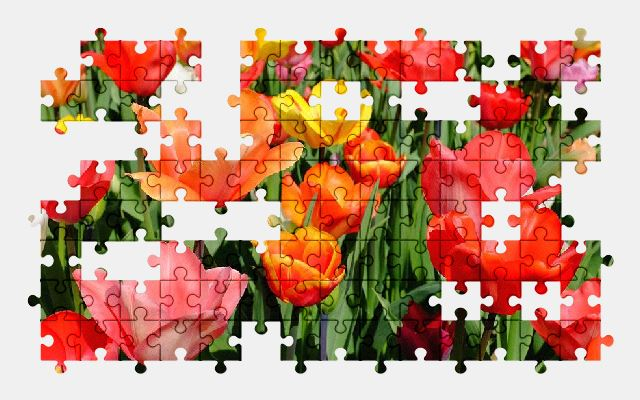free jigsaw puzzle online tulips,flower,blossom,bloom,colorful,nature