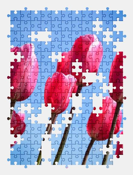 free jigsaw puzzle online tulips,flower,holland,nature