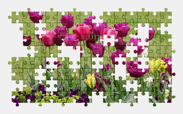 free jigsaw puzzle online tulips,purple,flowers,nature