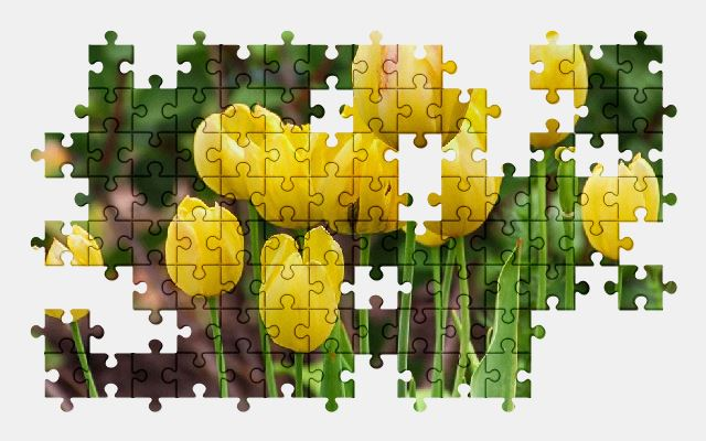free jigsaw puzzle online tulips,yellow,flower,spring,nature