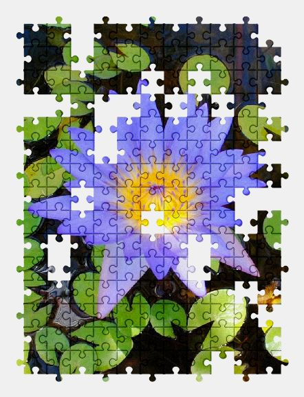 free jigsaw puzzle online water-lily,lily,pond,flower,plant,nature