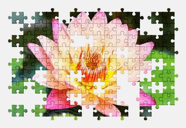 free jigsaw puzzle online water-lily,plant,nature,flower