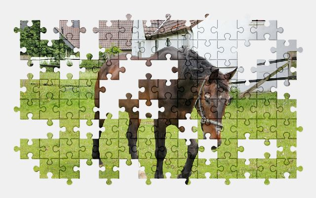 free jigsaw puzzle online horse,animal